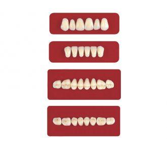 Акриловые зубы Unicryl боковые верхние форма 11 цвет C1 8шт